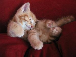 CuteExhaustedKitty